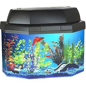 Hawkeye Sturdy Acrylic 5 Gallon Hexagon Aquarium Kit with Fluorescent Lighting