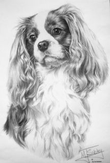 Custom Cavalier King Charles Spaniel Pen Ink Design Dog Breed T Shirt to 4Xlg
