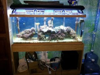 55 Gallon Tank with Stand T5 48inch Light 2BACK Pumps 1JET Pump