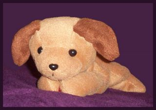 Retired Ty Beanie Babies RARE Brown Soft Cute Puppy Dog Plush Stuffed Animal 8""