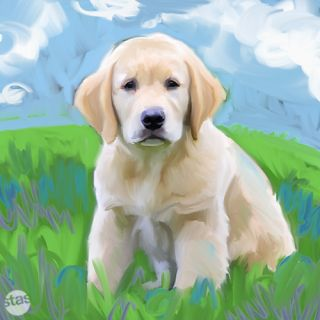 Golden Retriever Puppy Pup Dog Oil Canvas Painting Print 15 Medium