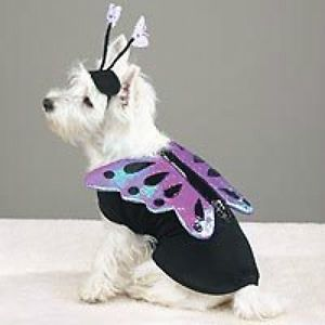 Flutter Pup Butterfly Pet Halloween Costume XS s M L XL