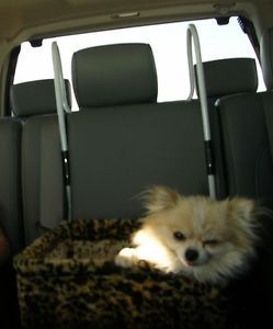 Leopard Print Small Dog Car Booster Seat