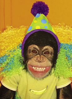 Chimp Monkey with Clown Hat Laughing Funny Birthday Card by Avanti