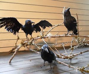 "Lot 3 Large 8"" Black Crows Ravens Feathers Styrofoam Halloween Prop Decorations"